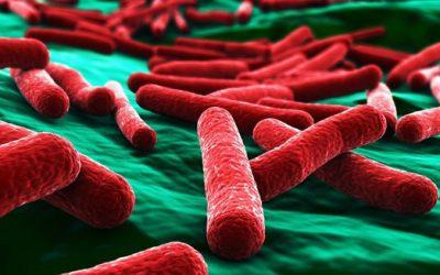 Algae and Bacteria Health Alert